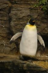 Cincinnati Zoo Penguin